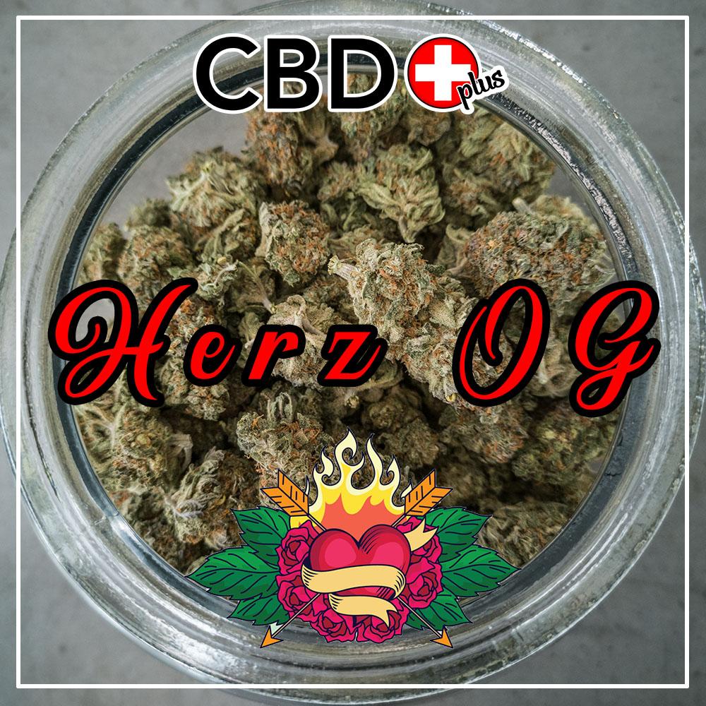 Herz-OG-news
