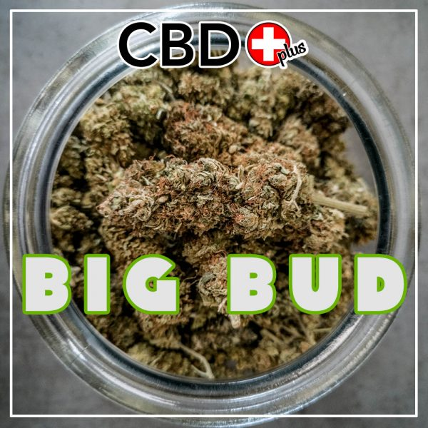 "CBD Blüten - 1g - ""Big Bud"" - 8% CBD - Indoor"