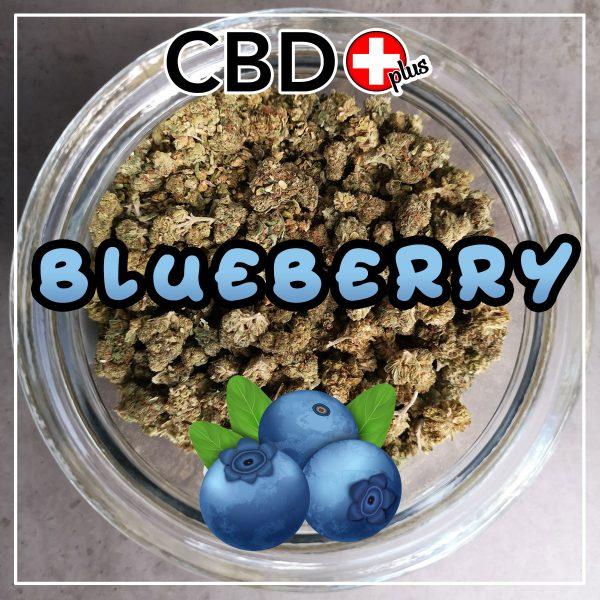 Blueberry CBD Blüten