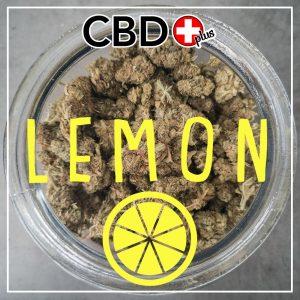 Lemon CBD Blüten