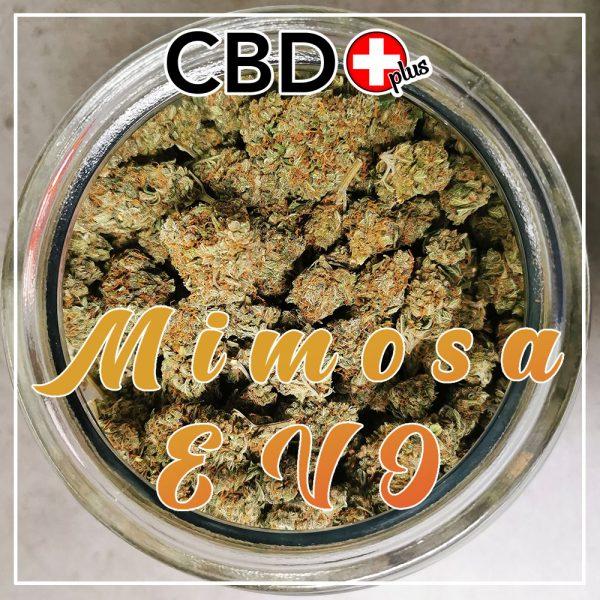 "CBD Blüten - 1g - ""Mimosa Evo"" - 6,5% CBD - Indoor"